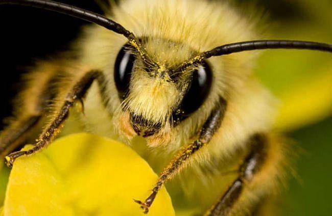 Щоб бджоли не жалили. Захисний рада.