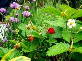 Дачні та садові роботи в липні. Корисні поради і рекомендації досвідченого садівника