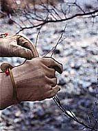 Дачні роботи в листопаді. Корисні поради дачникам від досвідченого садівника