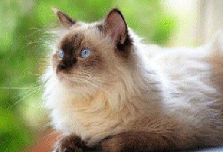 Даємо ліки кішці: поради кошковладельцам