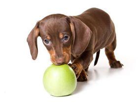 Дріжджі для собак і їх користь
