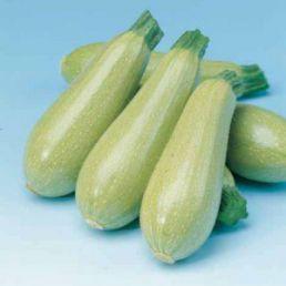 Які сорти кабачка вирощують?