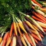 Кращі сорти моркви