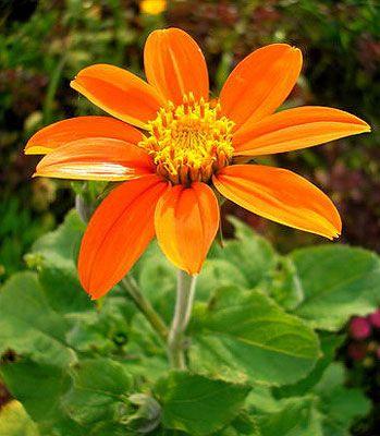 Оформлення квітників на садовій ділянці