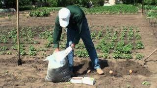 Особливості вирощування картоплі на одному місці