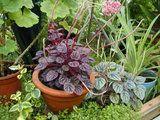 Корисні поради від фен-шуй по вирощуванню кімнатних рослин