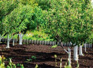 Розміщення дерев в саду