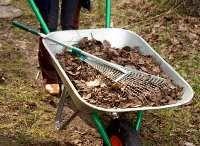 Сад та город в жовтні. Корисні поради дачникам від досвідченого садівника