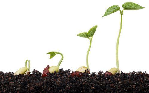Секрети вибору і приготування грунту для розсади
