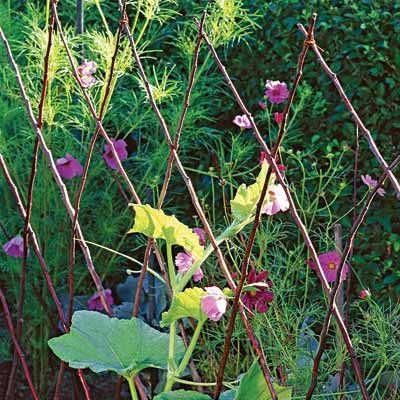 Шпалери для рослин