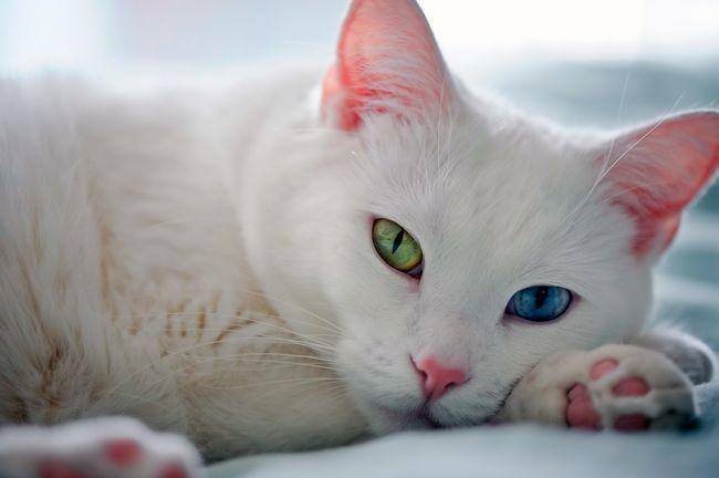 Порада. Очі кішки.