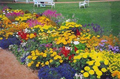 Терміни цвітіння садових квітів