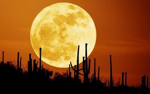 Такий звабливий, загадковий, але небезпечний місячне світло ...