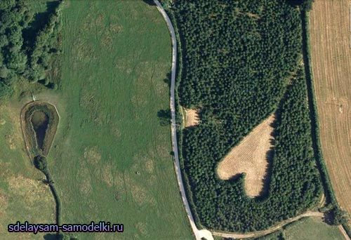 Уїнстон Хауз виростив ліс у вигляді серця на згадку про дружину