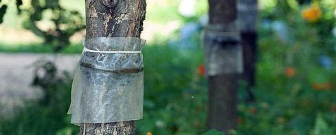 Знищення комах, шкідників саду. Методи і способи.
