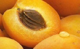 Шкода і користь абрикосових кісточок