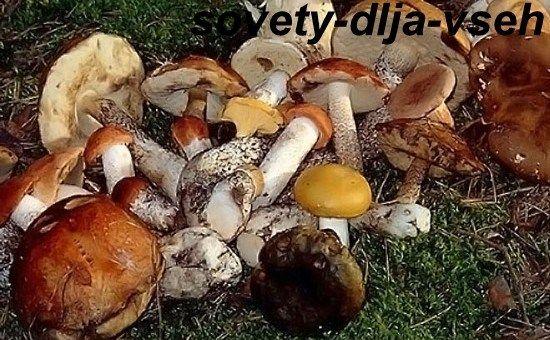 Шкода і користь грибів: корисні поради всім грибникам