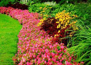 Багаторічні квіти в саду, квітучі все літо