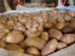 просушка картоплі
