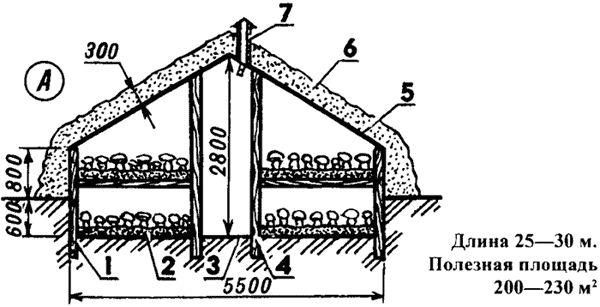 Вирощування шампіньйонів за технологією грачова